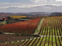 Contemplando los viñedos de La Rioja