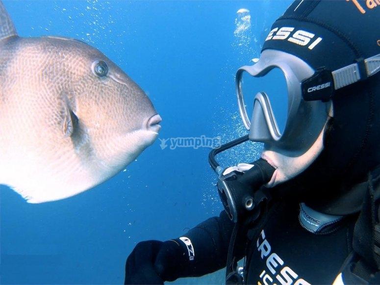 在Murcia潜水经验