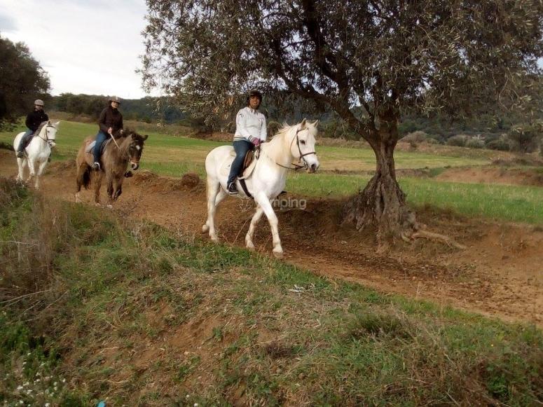 Conoce el Montseny a caballo
