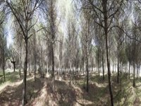 paintball field full of trees