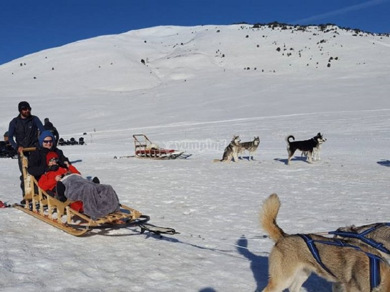 Sleds dragged by nordic dogs