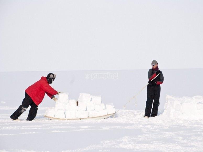 Compactando la nieve para el iglu