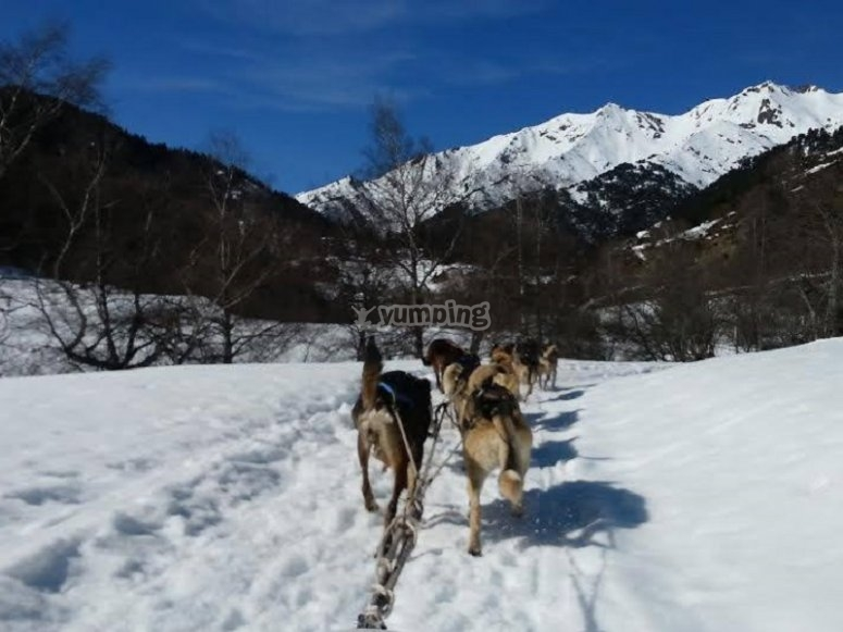 Mushing route in Partacua
