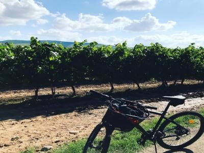 Alquiler de bici y visita en bodega, La Rioja