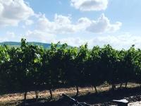 Bicicleta en el camino de viñedos