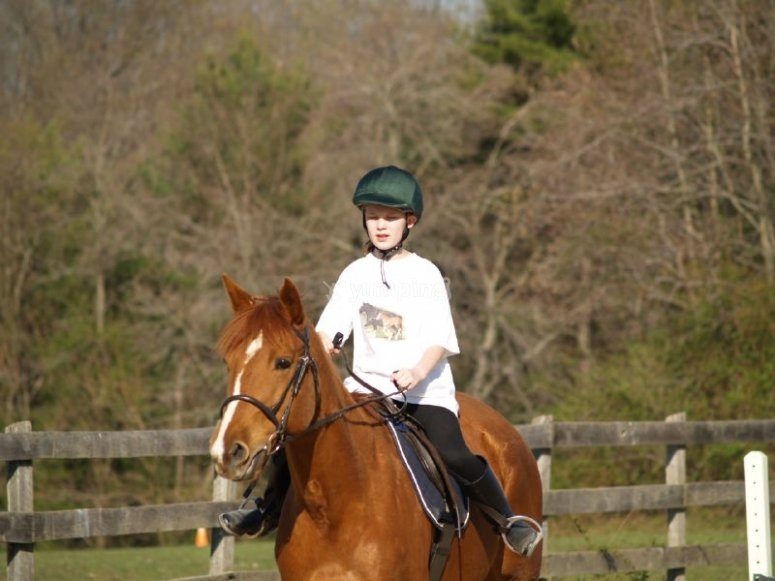 Clases de equitación separadas por niveles