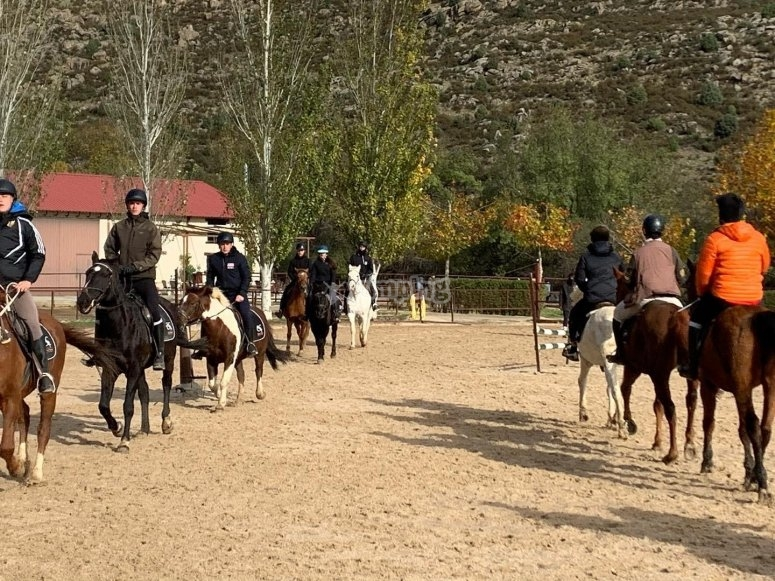 Sobre los caballos en el centro