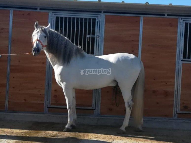 Listos para unas clases de equitación
