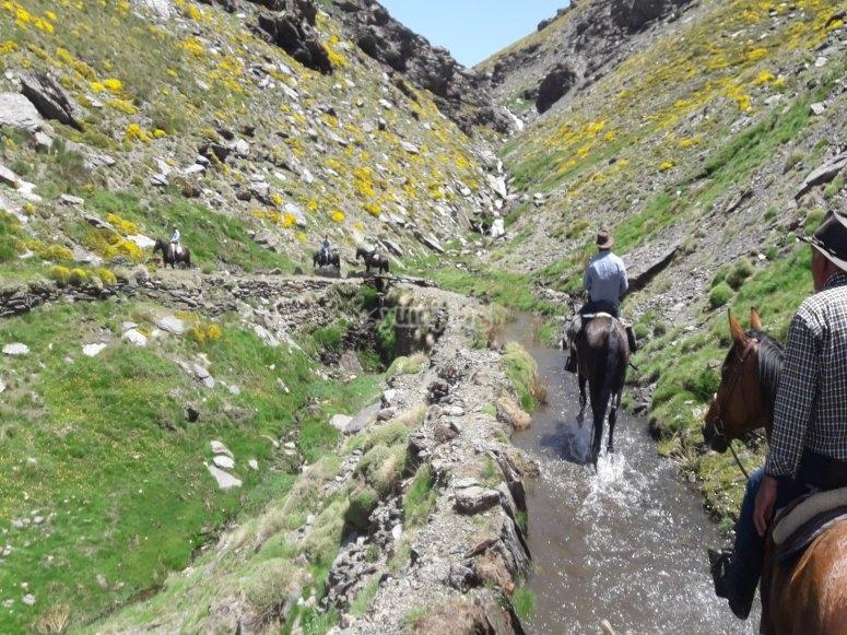 Caminos para disfrutar de Berchules