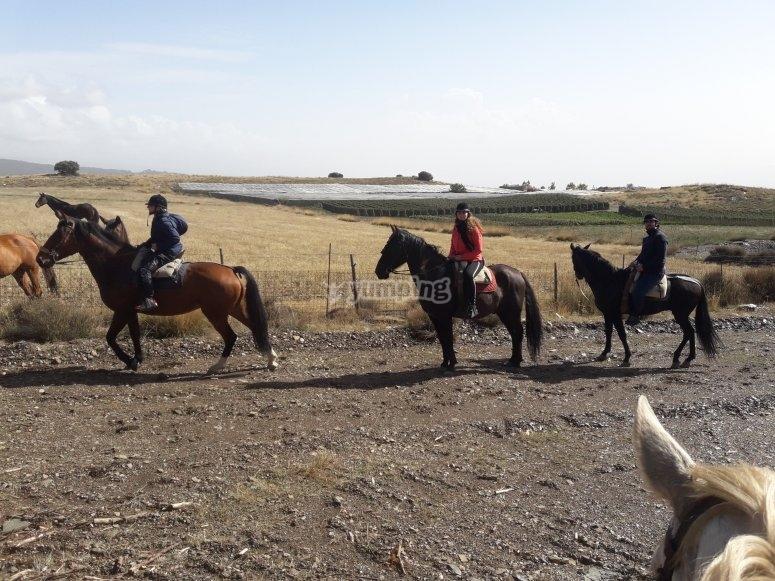 Diverse tecniche di equitazione