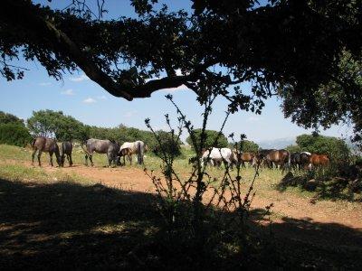 Senderismo rodeado de caballos Algarinejo 3 horas