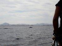 Animaux marins du bateau