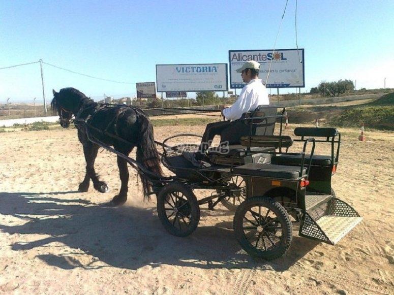 Carrozze trainate da cavalli