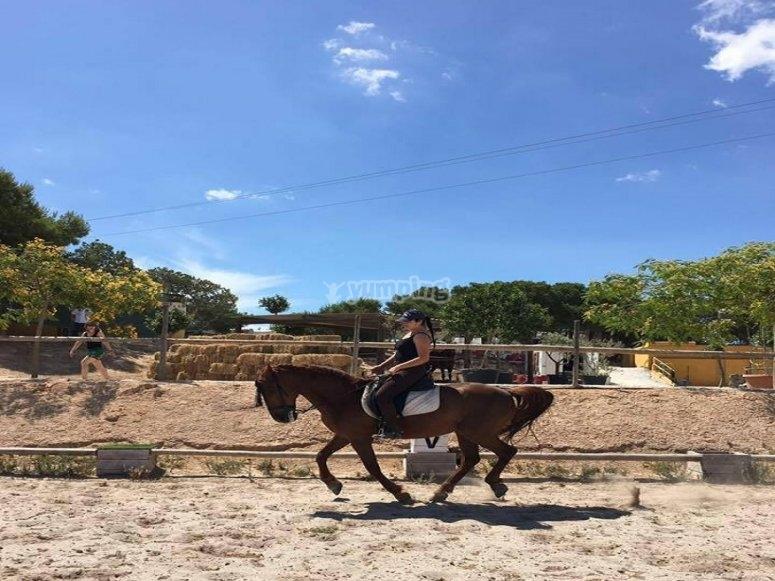 Prime lezioni di equitazione