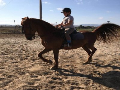 Clase de equitación durante 1 hora El Altet