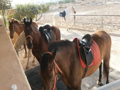 Horseback riding in Arenales del Sol 1 hour