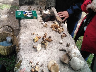 Mycological Route in El Barraco 5 hours