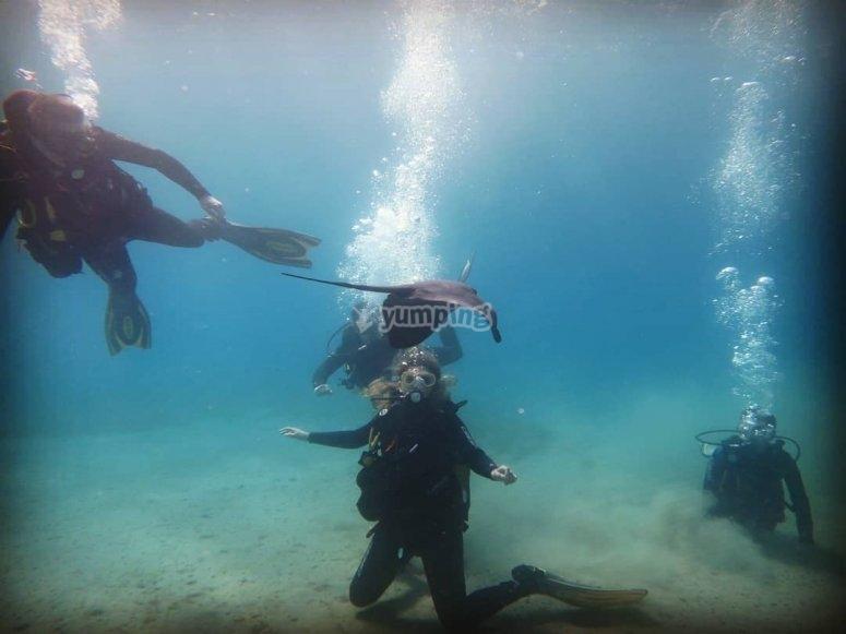 Clase Open Water Diver en Murcia