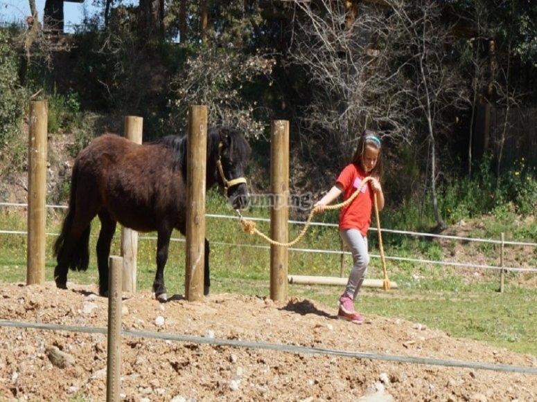 Nina walking pony
