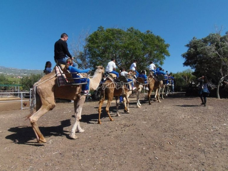 Camel ride with a guide