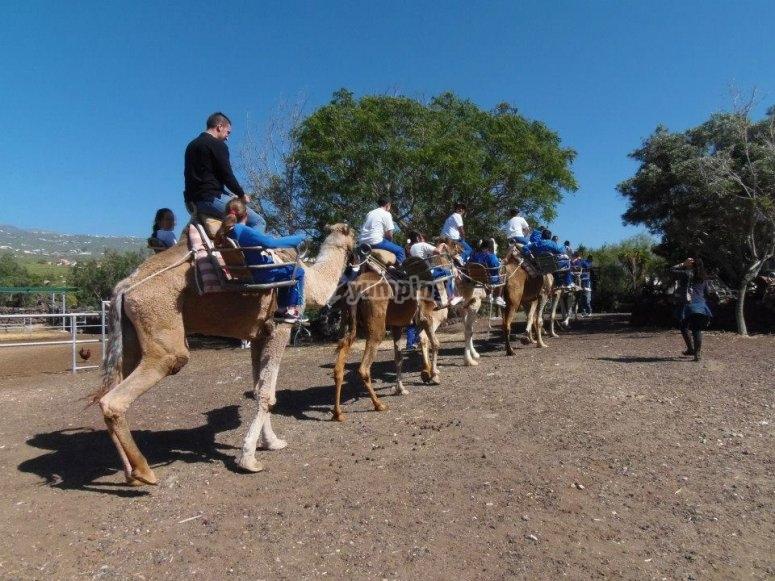 Salida en camello guiada por un monitor