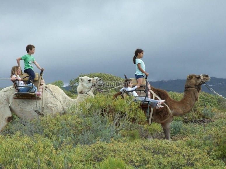 Paseo en camello por nuestra finca