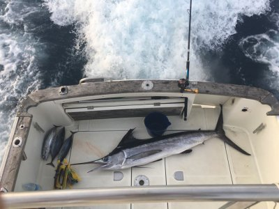 Trolling fishing with 3 h boat rental in Santurce