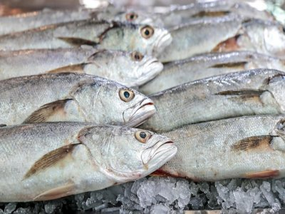 Pesca de gran fondo en barco privado Santurce