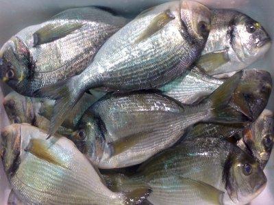 Salida para pesca de medio fondo en Santurce 3 h