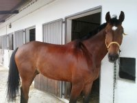 One of our wonderful horses