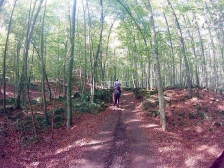 Ruta por un bosque