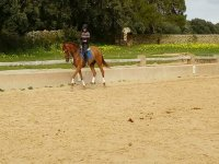 With the horse on the outdoor track