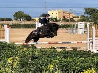 Show jumping on the sand track