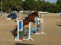 Training jumping with the horse