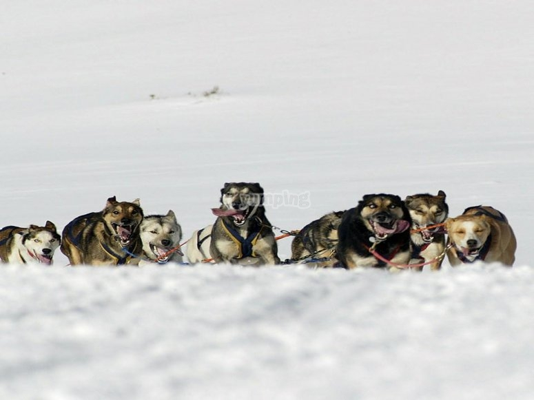 Dogs relaxing on the snow