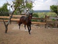 Bellos caballos