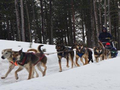 Salida en trineo tirado por perros en Andorra 5 km