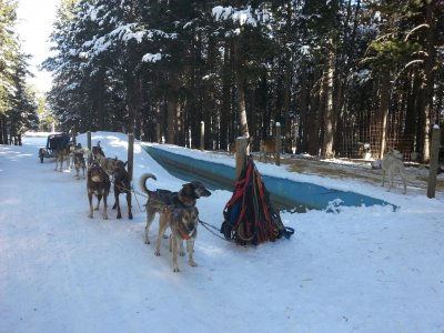 Dog Sledding driving special tour couples 30 min