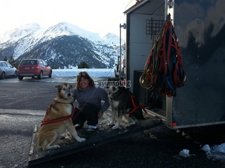 Musher next to the dogs
