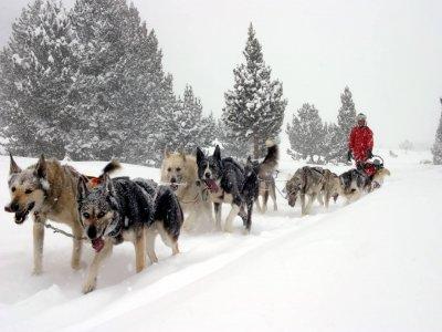 Moto de nieve doble y mushing para parejas Andorra