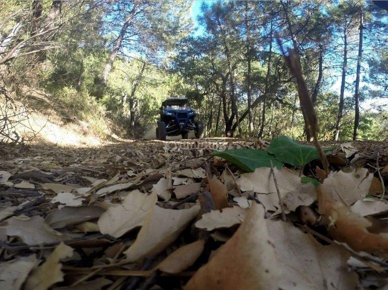 Buggy en el camino cubierto de hojas secas