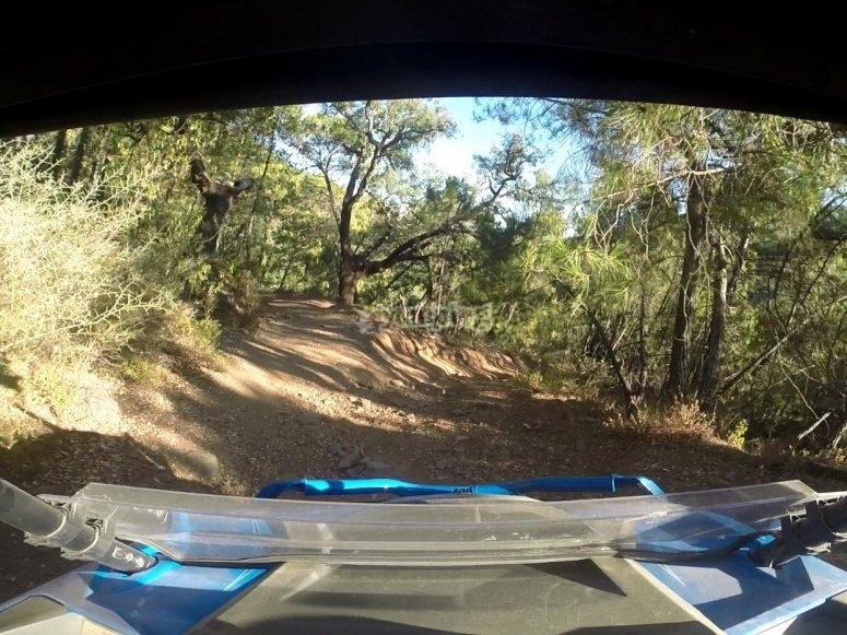 Camino desde el interior del buggy