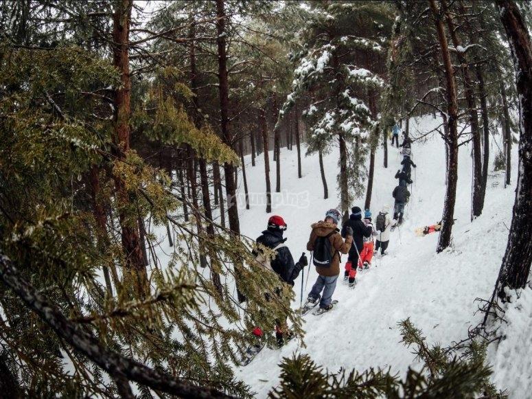 Con raquetas por los bosques de Granada