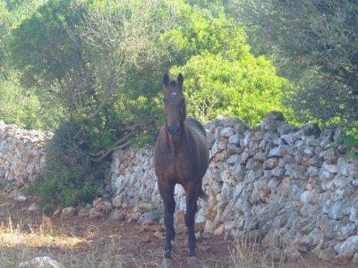 Equitación Menorca Cuadras Binidali