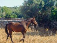 马在农场散步
