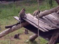 varios monos en las tablas de madera