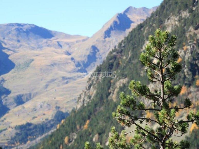 Naturaleza en el Pirineo