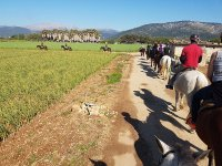 Horse Riding for Groups and Tapas in Mallorca 5 h
