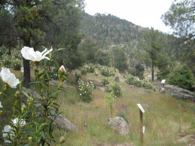 Visita guiada Senda Botánica El Barraco Ávila