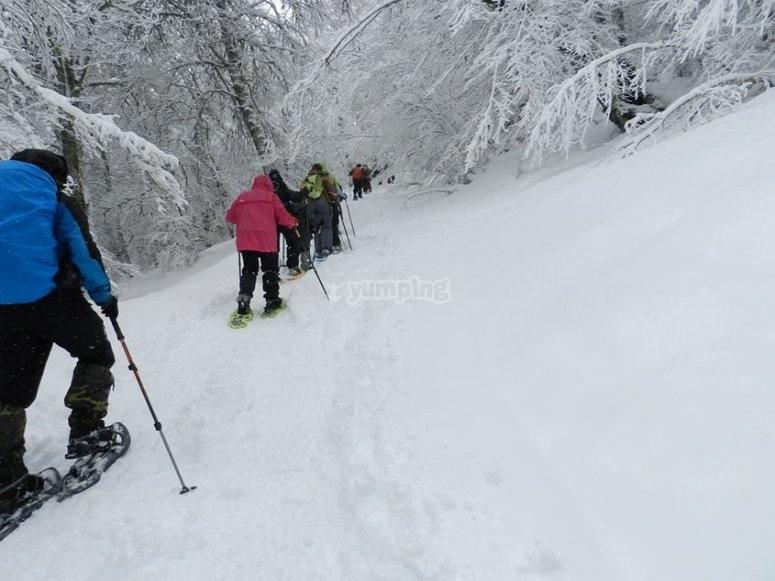 Tra i pini con le racchette da neve